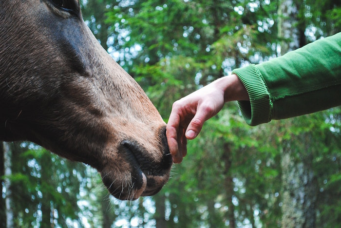man is touching horse nose
