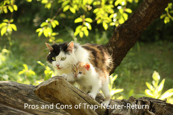Pros ad Cons of TNR