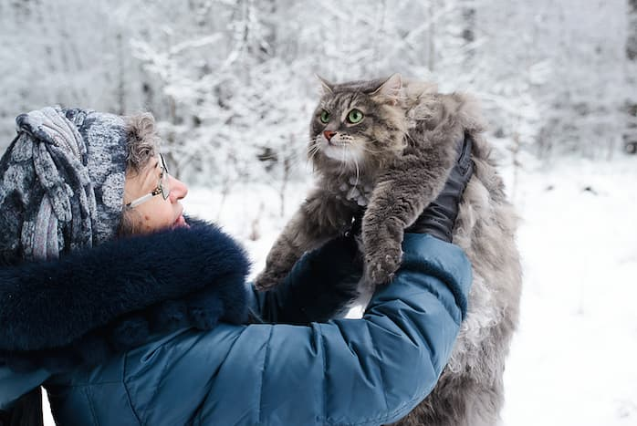 woman holding a Siberian Forest Cat