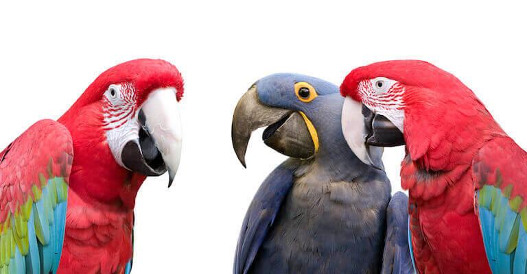 Social Parrots