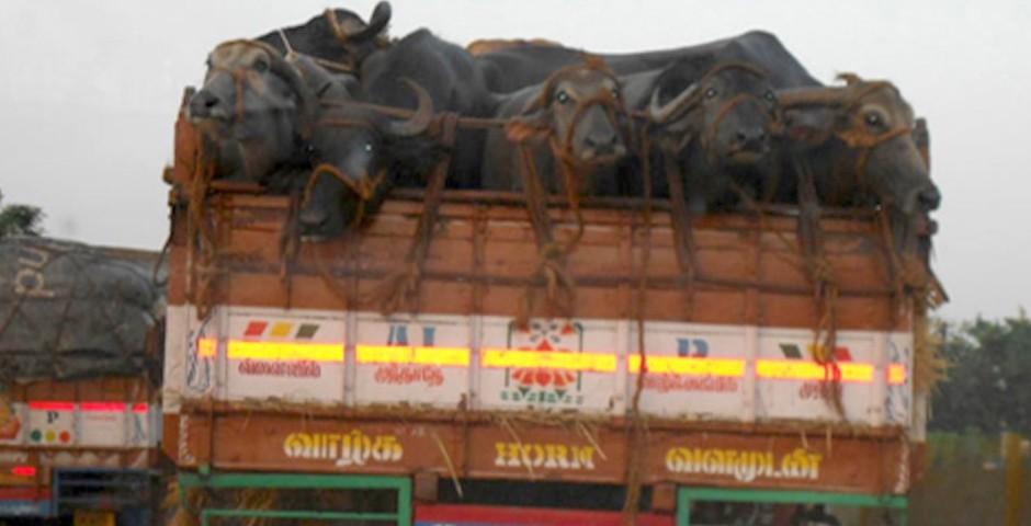 My Road Trip Bangalore to Chennai