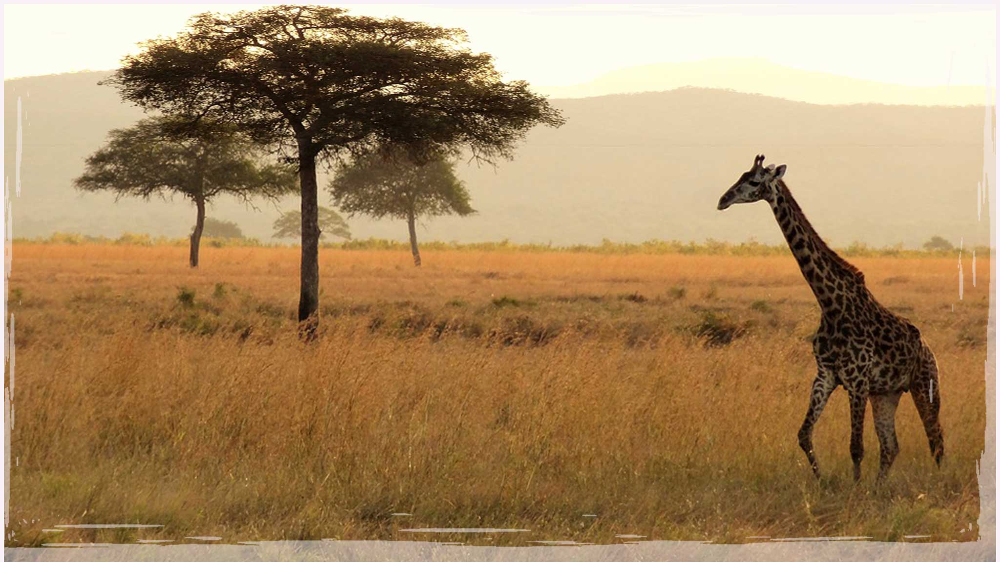 5 Reasons Why Expats Should Try Out a Safari