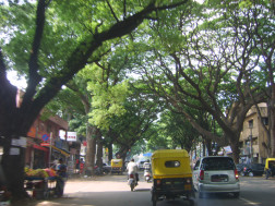 This is one of the tree-lined streets that lead to where I believe Alina and I will renting our new flat. Stunning!!