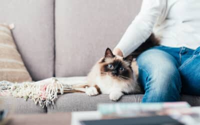 The Dos and Don'ts of Living in an Apartment with Pets