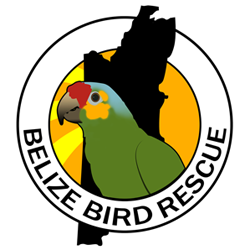 Belize Bird Rescue