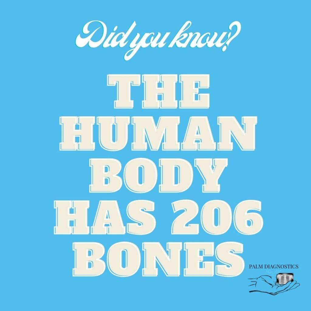 206 bones w_ graphic