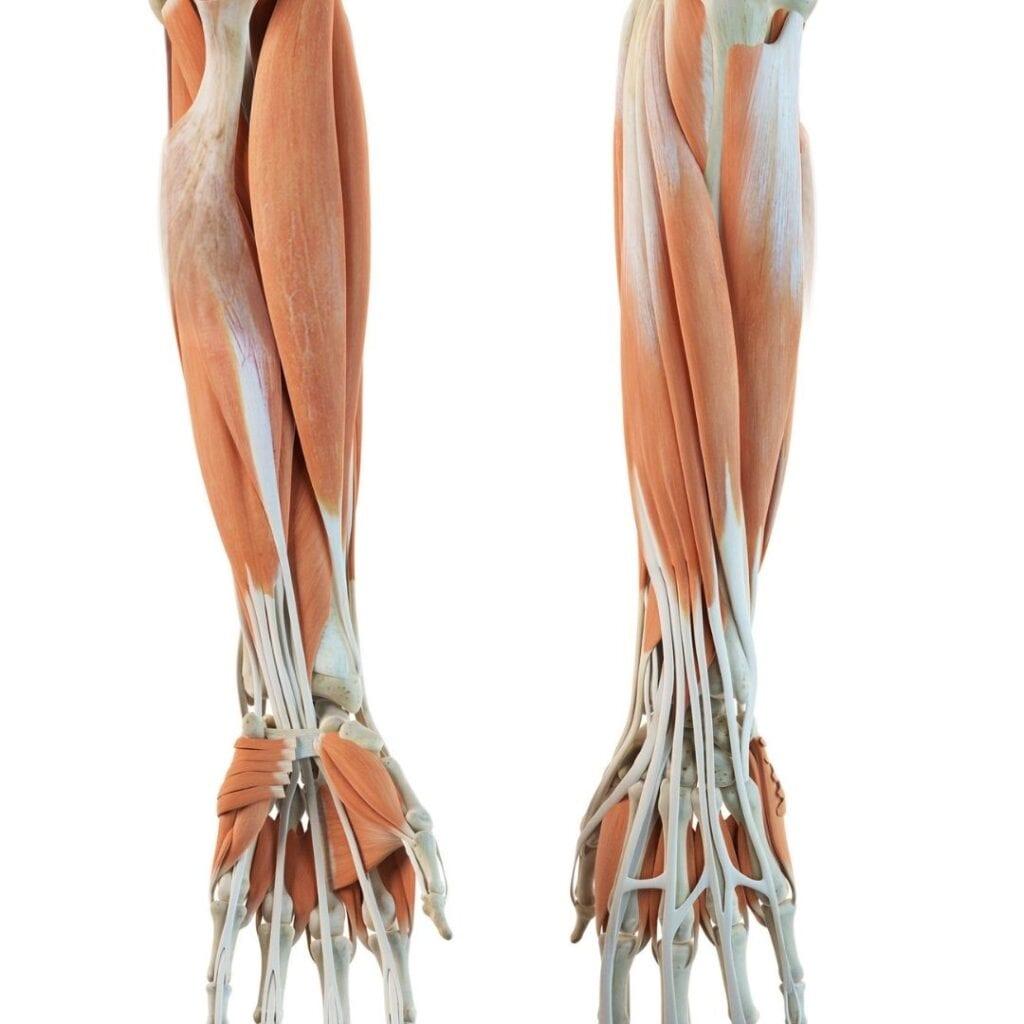 Tips for keeping bones healthy blog post