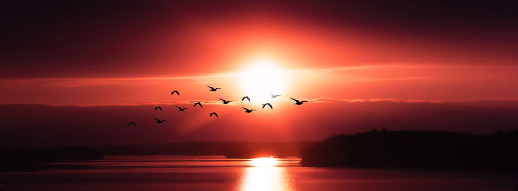 Red Sunset with Birds