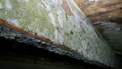 5 Signs of Mold