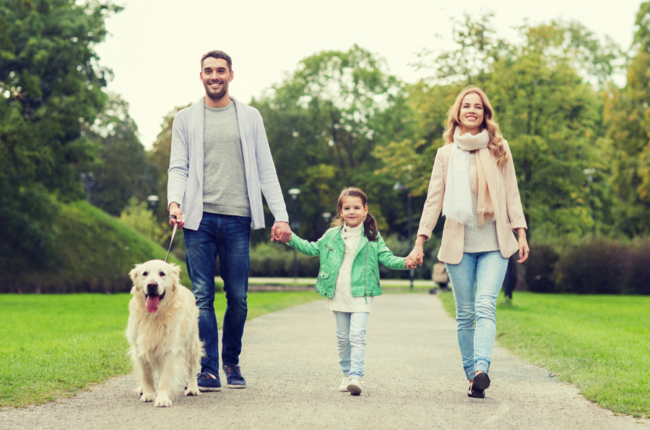 Mother, father and small daughter holding hands and walking their dog in park