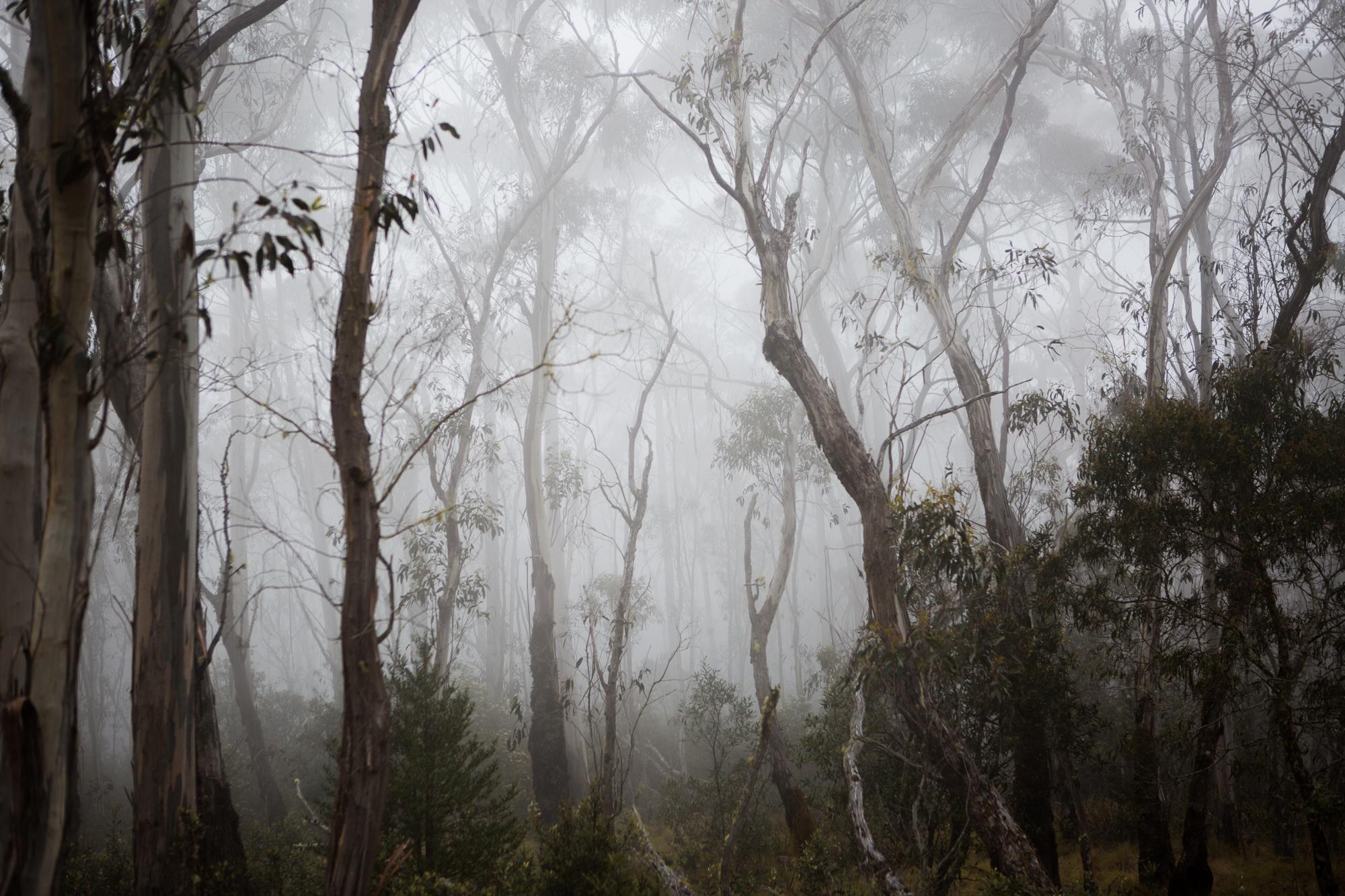 51-Bec_Kilpatrick_Photography_AustraliaBEC_8482