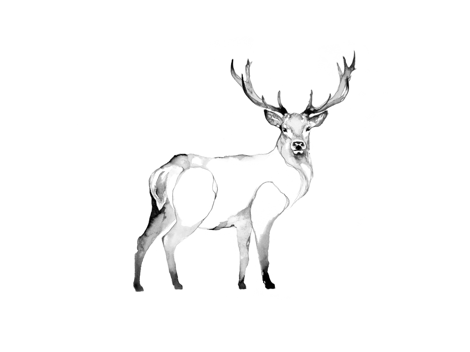 2-Bec_Kilpatrick_Illustration_Antlers_WingsELK