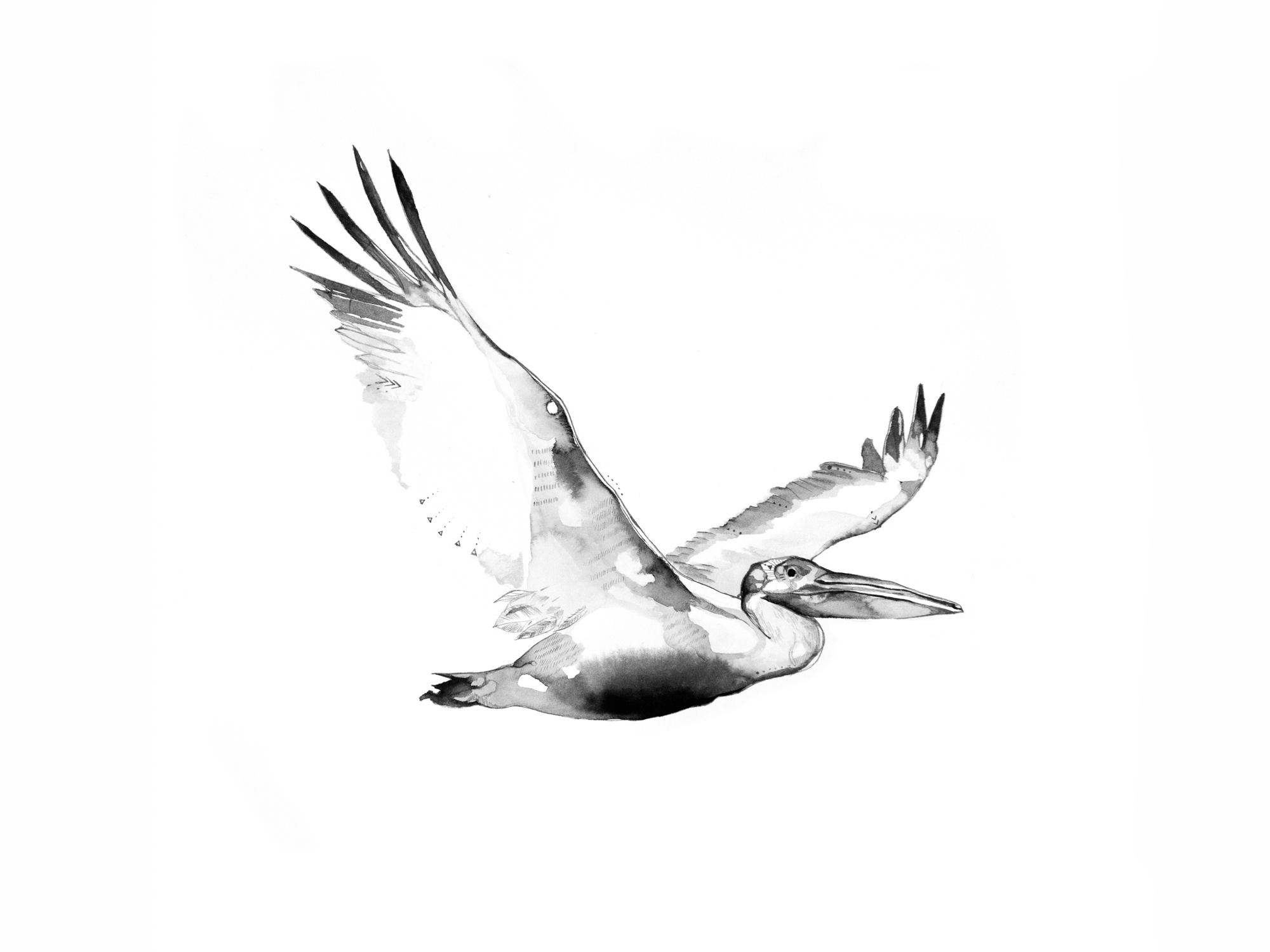 3-Bec_Kilpatrick_Illustration_Antlers_Wingspelican