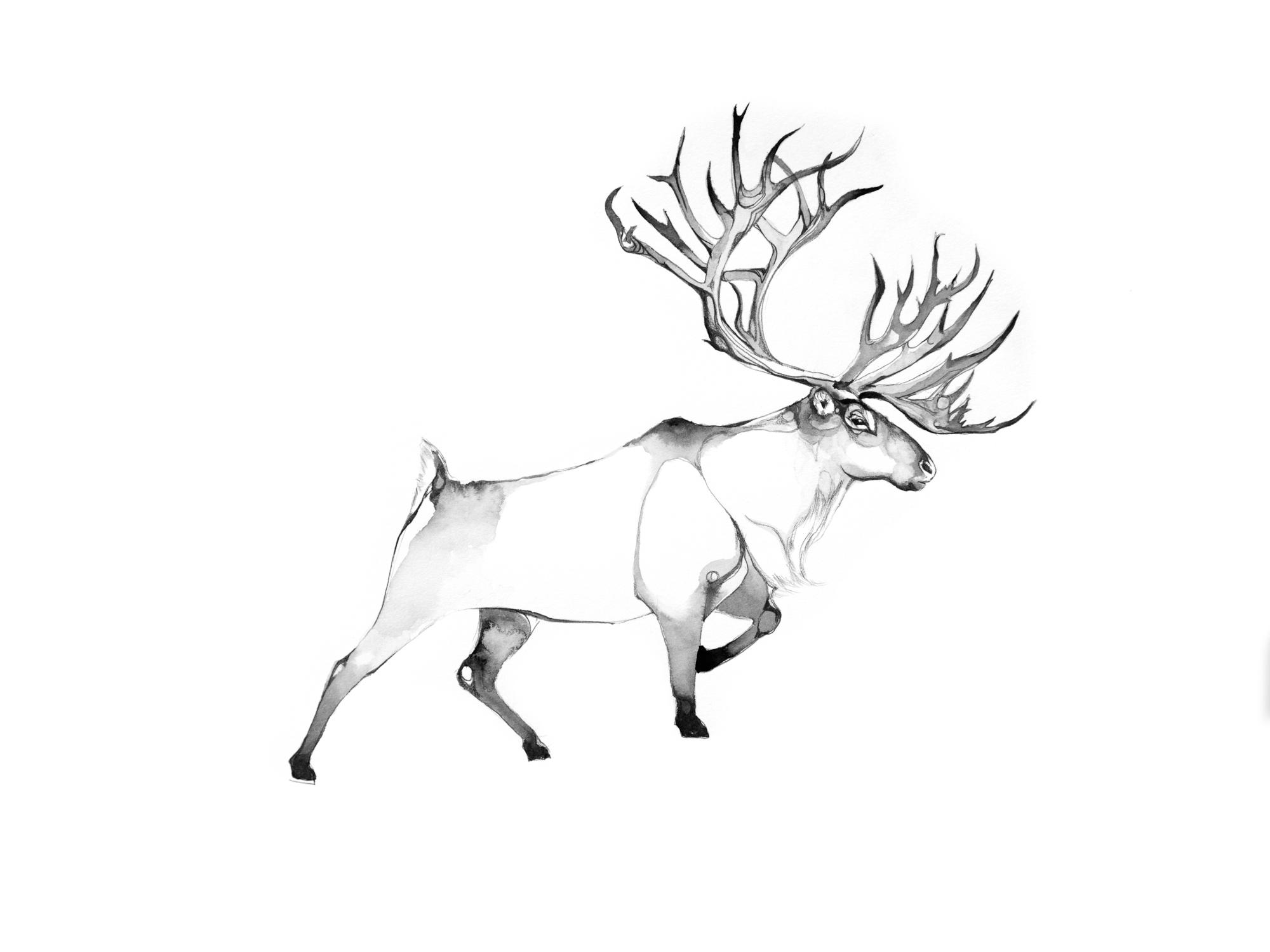 4-Bec_Kilpatrick_Illustration_Antlers_WingsREINDEER