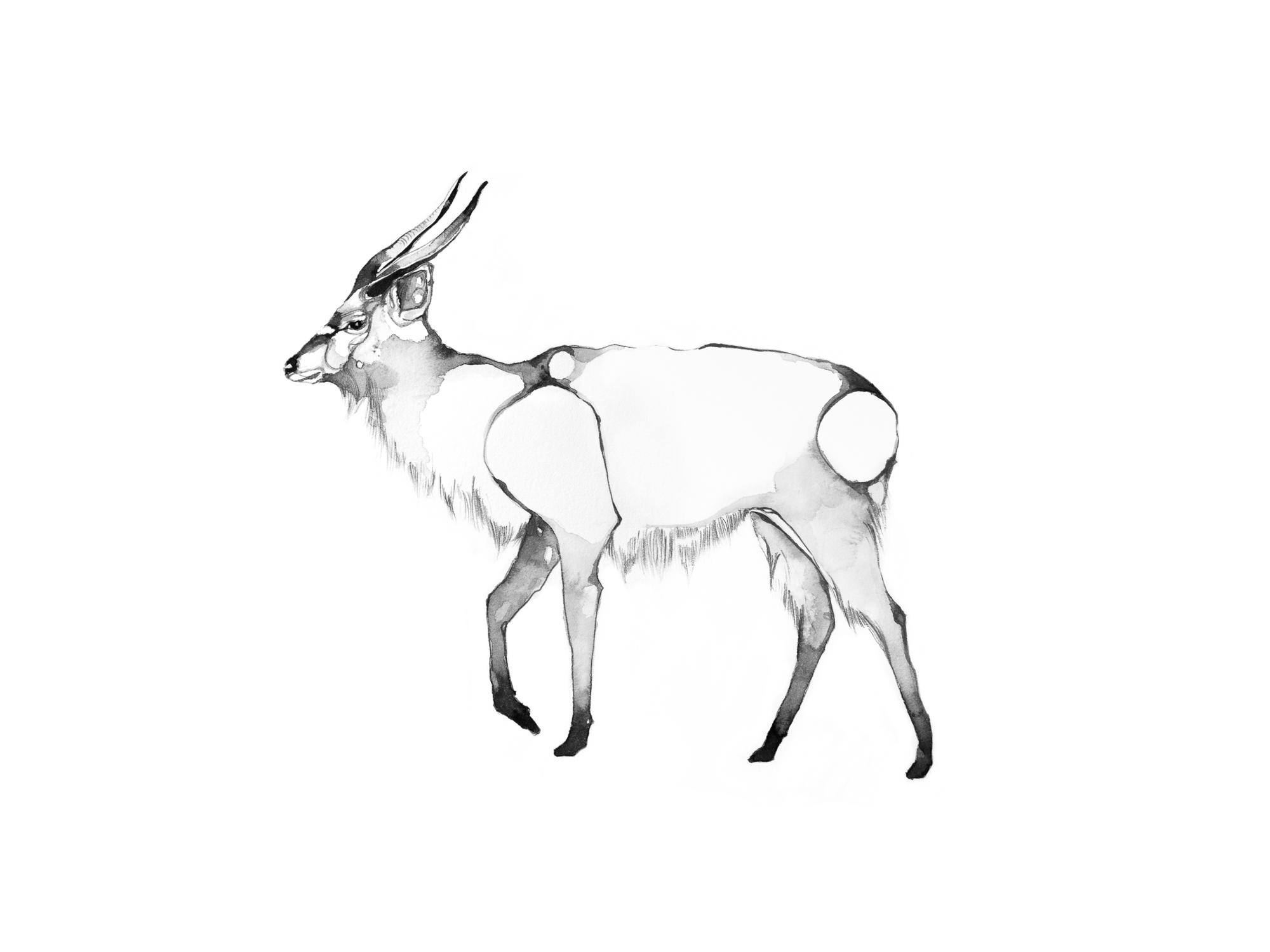 5-Bec_Kilpatrick_Illustration_Antlers_WingsANTELOPE