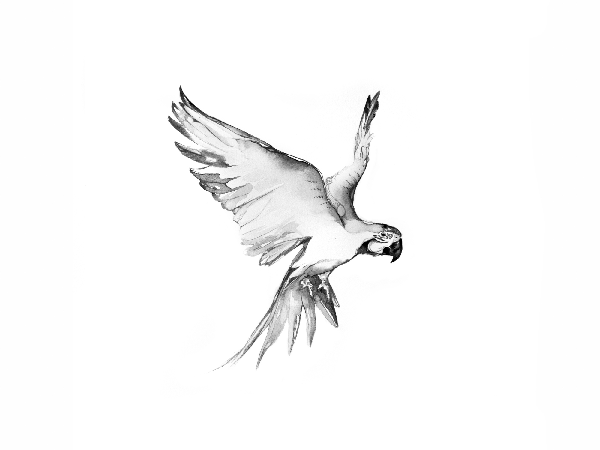 6-Bec_Kilpatrick_Illustration_Antlers_WingsPARROT
