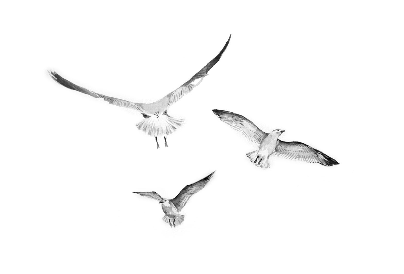 bec_kilpatrick_birds
