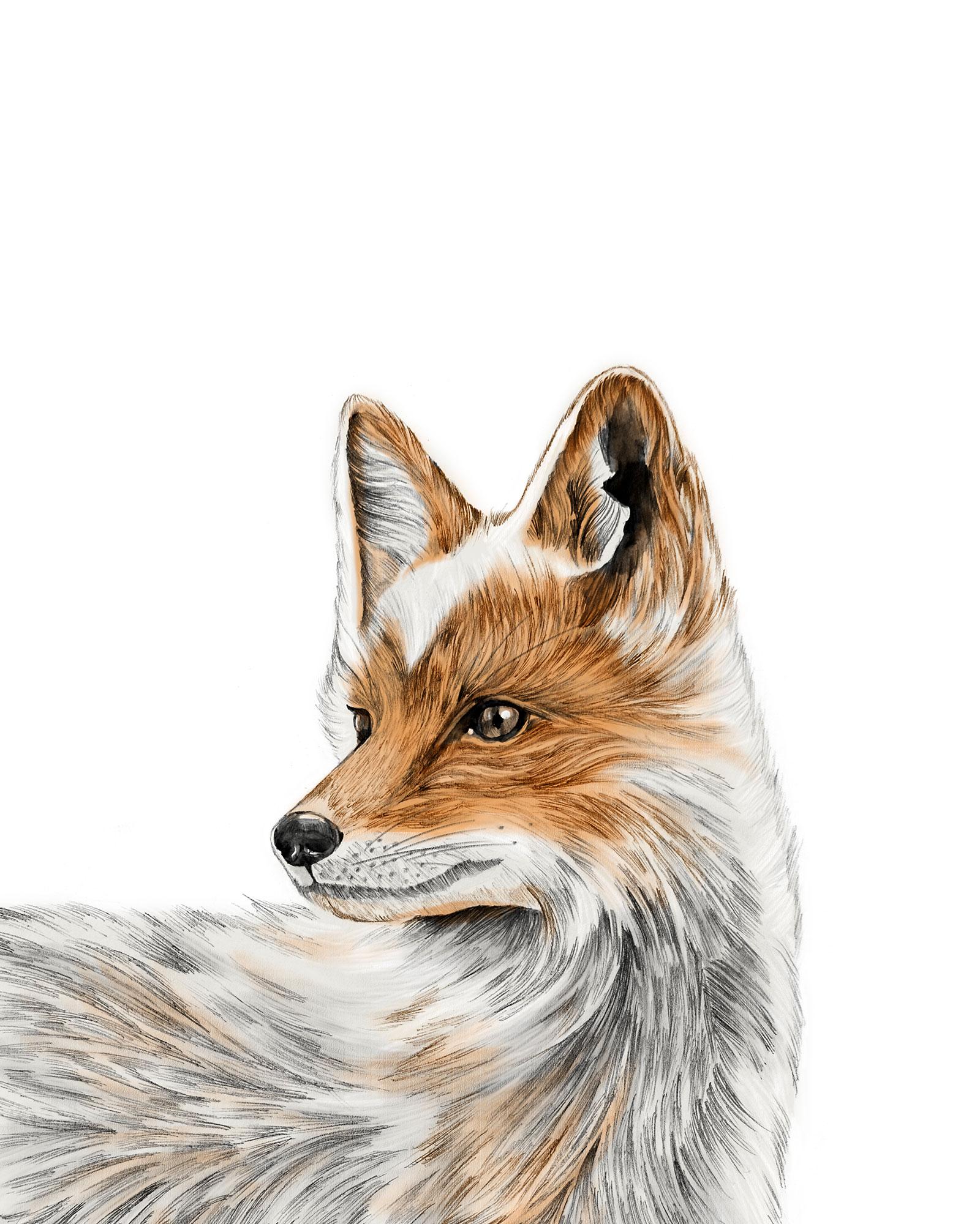 foxprintportrait8x10