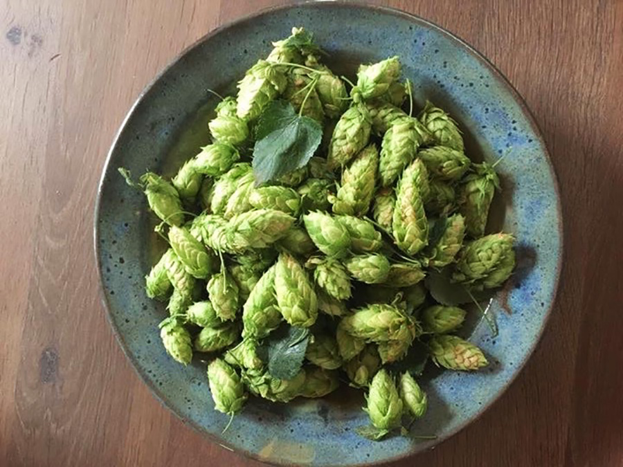 Fresh Hops in a bowl