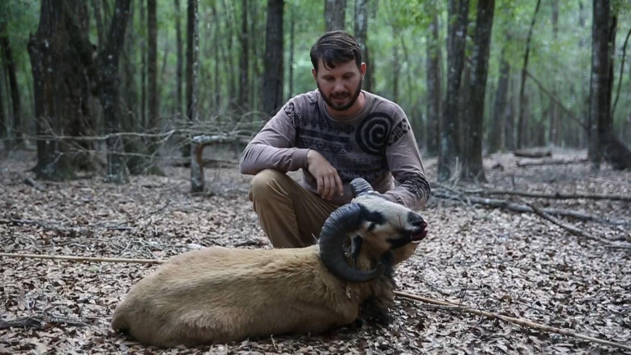 sheep pic 3 1