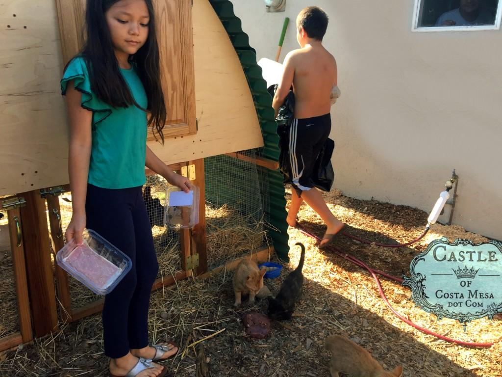 170528 Nunu feeding kittens behind coop 9591