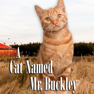A Cat Name Mr. Buckley cover