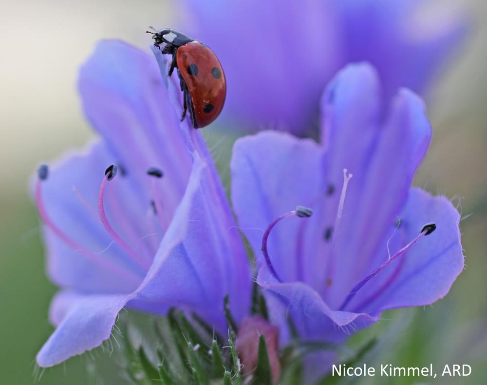 Blue Weed Nicole Kimmel (3)