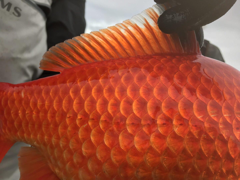 Goldfish Firelight Pond