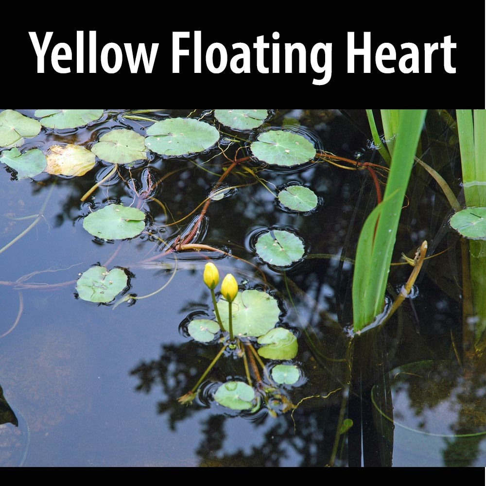 Yellow Floating Heart-1