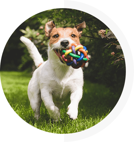 Arbor Dog Daycare