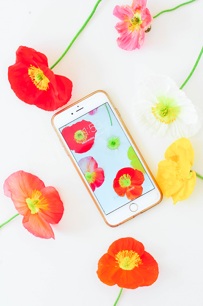 Poppy Wallpaper Download via @theproperblog