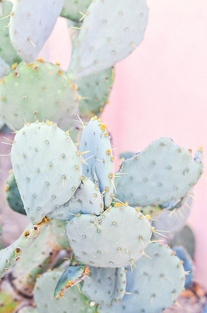Cactus Wallpaper Download via @theproperblog
