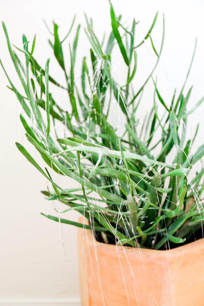 Make plants holiday ready