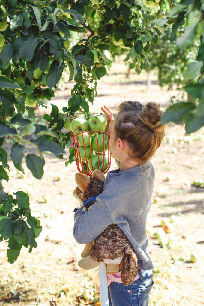 little girl picking apples