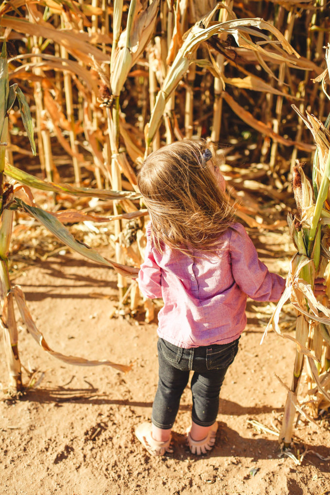 toddler girl in corn field