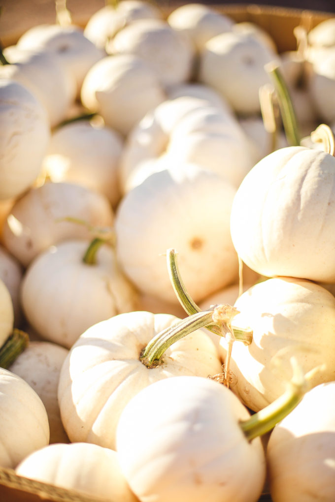 closeup of white pumpkins