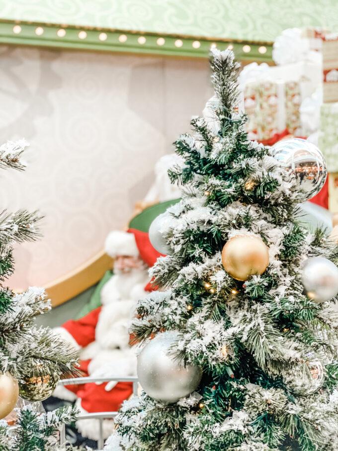 santa posing behind christmas trees