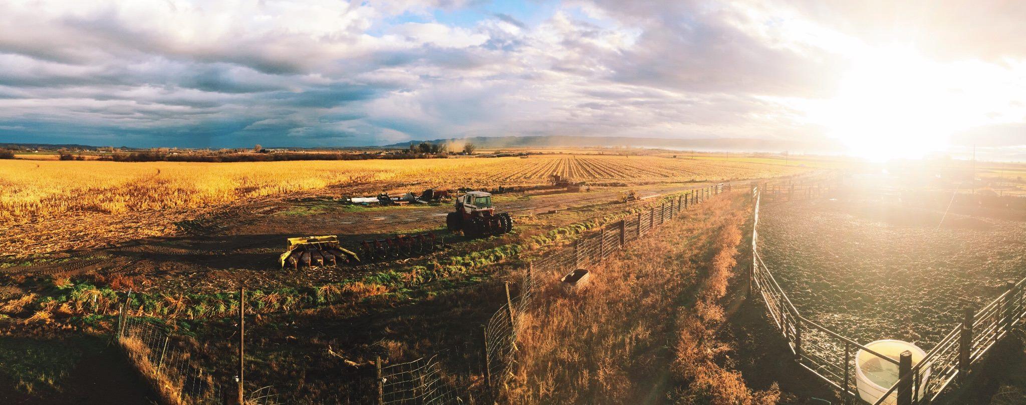 Shenk Livestock and Equipment, farm panorama