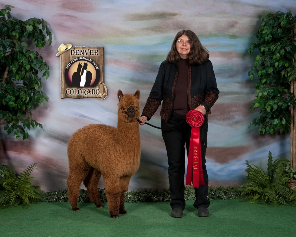 MountainSkyAlpacas2