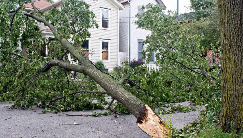 tree-on-house-848x480