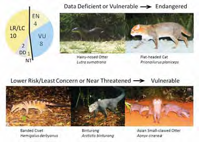 Conservation challenges and opportunities for Borneo's carnivores