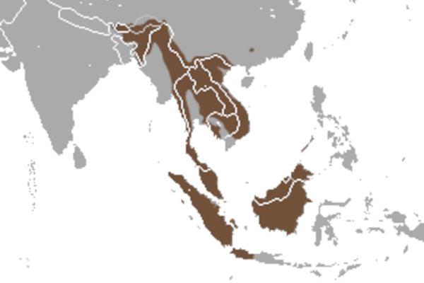 Predicted distribution of the binturong Arctictis binturong (Mammalia: Carnivora: Viverridae) on Borneo
