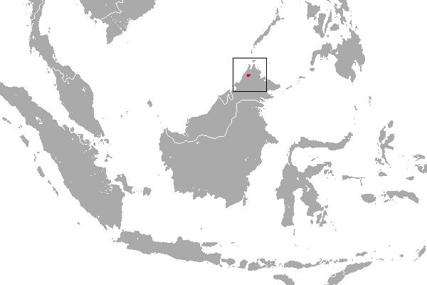 Predicted distribution of the Bornean ferret badger Melogale everetti (Mammalia: Carnivora: Mustelidae) on Borneo