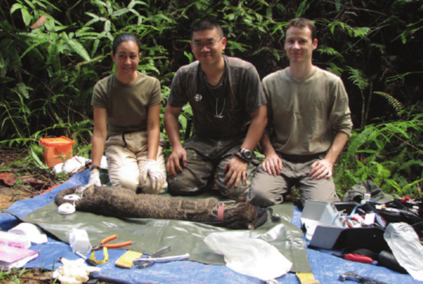 Effective use of radiotelemetry for studying tropical carnivores