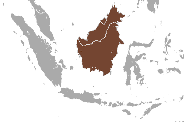 Predicted distribution of the collared mongoose Herpestes semitorquatus (Mammalia: Carnivora: Herpestidae) on Borneo