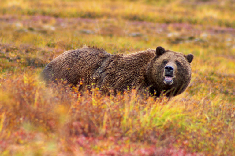 Microscale den-site selection of grizzly bears in southwestern Yukon