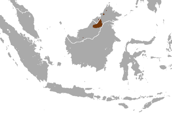 Predicted distribution of Hose's civet Diplogale hosei (Mammalia: Carnivora: Viverridae) on Borneo