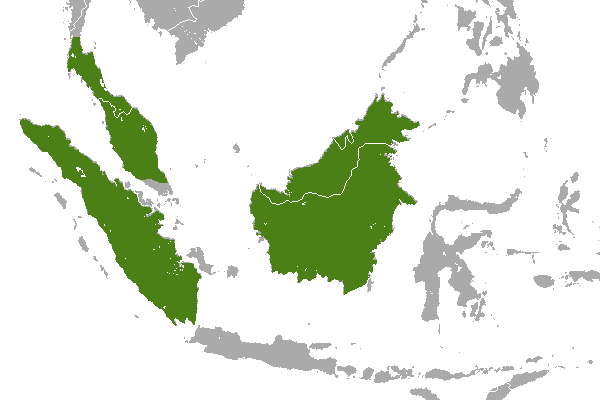 Predicted distribution of the Malay weasel Mustela nudipes (Mammalia: Carnivora: Mustelidae) on Borneo