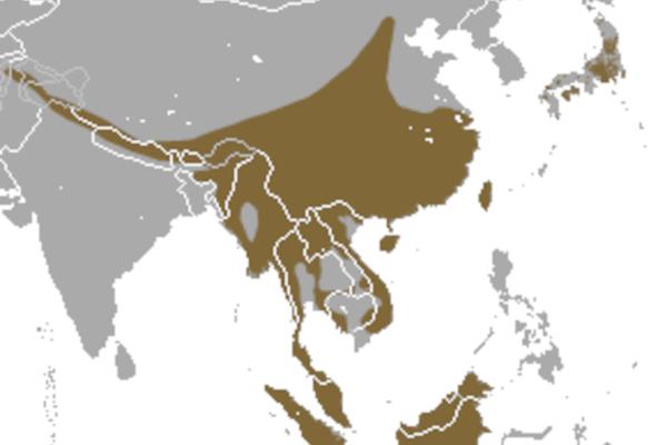 Predicted distribution of the masked palm civet Paguma larvata (Mammalia: Carnivora: Viverridae) on Borneo