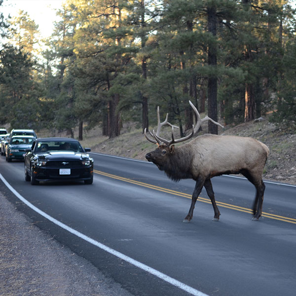 Research: When Vehicles and Mammals Collide